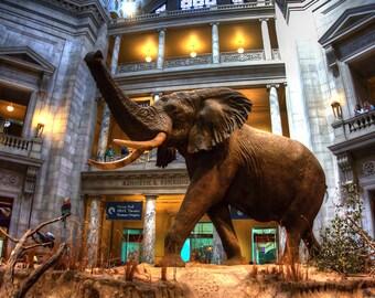 Natural History Museum, Washington DC