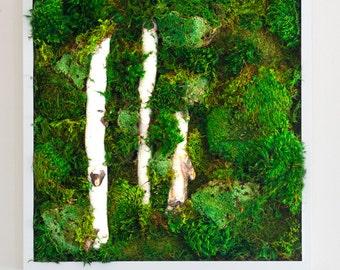 """Moss Wall Art ~ Moss Art Work ~ REAL Preserved Moss ~ No Maintenance Required ~ 20""""x20"""" ~ """"White Light Break"""""""
