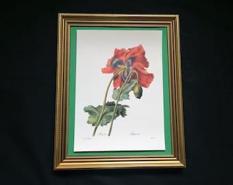 Superb Botanical Print by P J Redoute. Pavot, Papaver, (Poppy)