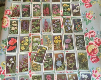 A full set of wills 1923 wild flowers cards