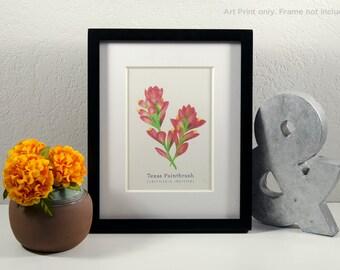 Texas Indian Paintbrush Art Print   Handmade Art Print   Botanical Drawing   Wildflowers   Flowers   Color Pencil   8x10
