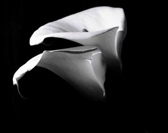 Flower Photography ,Black and White photography, Calla Lily, Flower photo, floral wall decor, wall art, fine art photography,Home decor