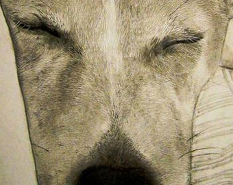 Jack russell pencil drawing, A2 Print of sleeping Jack Russell Terrier, detailed drawing of a pet sleeping on the couch