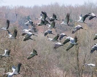 Cranes cinders 1