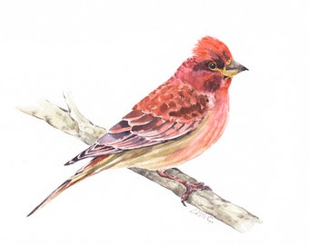 "Watercolor Print  ""Cassin's Finch"" Bird Art, Bird Print, Wall Decor, Bird Nursery print"