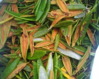 Labradore Tea Natural freshly picked