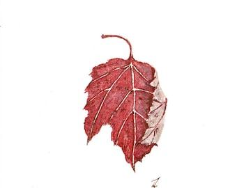 Maple Leaf #4