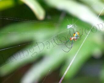 Spider Photo *digital download*