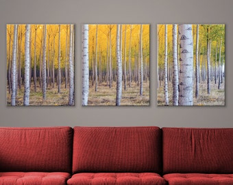 "Beautiful Yellow Birch Tree Forest Triptych 3-Panel Printed Canvas 1.5"" Thick 