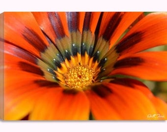 Glorious Gazania Canvas Print