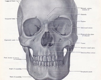 black and white skull print, printable digital image no. 834