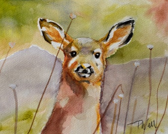 A Watercolor Painting of a Young Deer by Pattie Wall