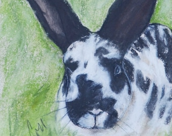 Black and White Bunny Rabbit in Grass Original Art Pastel Drawing By Cori Solomon