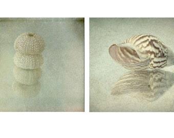 Two Seashell Print Set, Sea Shell Art, Nautical Decor Set, Beach Decor, Nautical Art Print, Sea Urchin Photography, Seashell Art Print