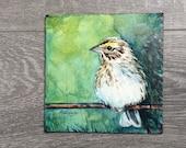 Savannah Sparrow ORIGINAL spring bird watercolour painting