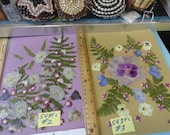 Choose your Real Pressed Flower Assortments Grown in Alaska 543 FL