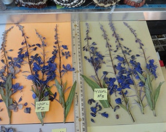 Choose your Alaskan Fireweed Pressed and Preserved 406 FL