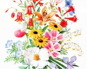 Vintage 1970 Wildflowers,  Plants Big Bouquet Floral Print for Framing, Loads of Color and Blooming Many Wildflower Blossoms