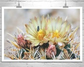 Cactus Art, Bumble Bee Photograph, Arizona, Tucson, Flower Photography, Insect Art, Nature Photography, Cactus Flower, Wildflowers
