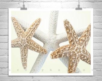 Art for Bathroom, Starfish Decor, Seashell Photo, Sea Shell Art, Starfish Wall Art, Fine Art Print, Photography Print, Star Fish Picture
