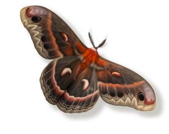 """Large Cecropia Moth 4.5"""" Papercut Decoration"""
