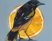 "Baltimore Oriole - bird art print, 6"" x 6""."