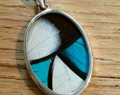 Real Butterfly Wing Pendant - Large Oval , black & white with Glowy Aqua and Turquoise.  Great, interesting unique gift. School Teacher mom
