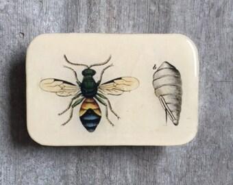 Entomology tin large, wasp, notions tin