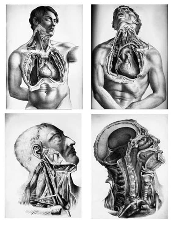 4x5 inch mens face human body male anatomy science clip art digital download collage sheet printable wall art