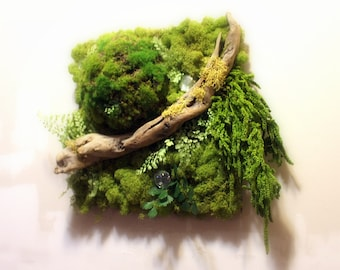 Real Moss Wall Art-12x12 frame-tree lichens-Cobblestone moss ball-NO WATER needed-Driftwood-Ferns-Hang vertical or horizontal-OOAK