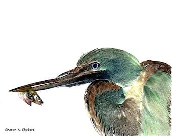 Green Heron With Fish Art, Bird Portrait, Waterfowl Artwork, Wildlife Wilderness, Aquatic Wall Hanging, Home Decor, Giclee Print, 8 x 10