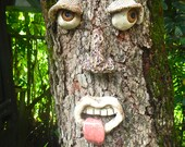 Silly Tree Face