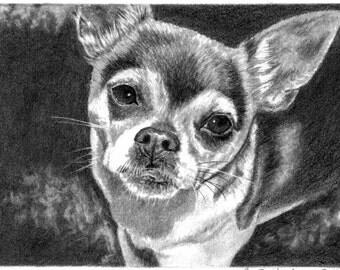 Custom Pet Portrait Dog Portrait Dog Sketch 5x7