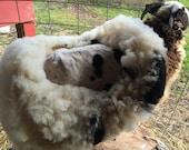 RESERVED 4 KATE Judy Palm Tree VIRGIN Jacob Sheep fleece