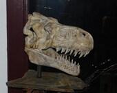 Tyrannosaurus rex Skull Sculpture large hand built by NW artist Michael Gonzales
