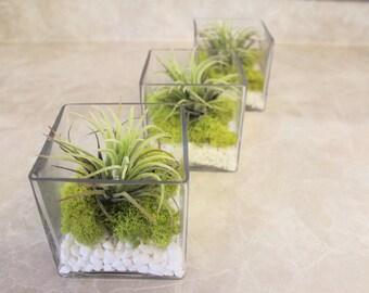 3pcs Artificial Air plant in a Square Glass Vase with Moss & White Rocks, Faux Plant, Floral Decoration, Green, Centerpiece, Arrangement