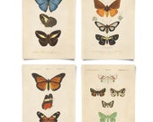Butterflies and Moths Print Set. Bohemian Decor Posters Set of 4. Vintage Diagram Entomology Chart insects gallery wall art chart CP287