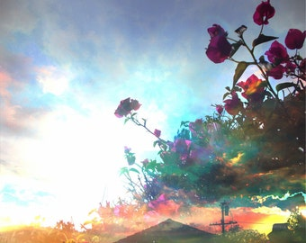 Flowering Cloud sunset Photography Giclee art print