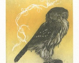 Northern Pygmy Owl, Original Etching