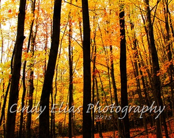 Blank Note Cards, Fall Note Cards, Greeting Cards, Note Cards, Autumn, Fall, Yellow Leaves, Fall Photography, Nature, Autumn woods, Leaves