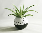 Sphere Succulent Air Plant Planter // Black + White Dot