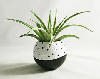Sphere Succulent Air Plant Planter // Black + White Dot