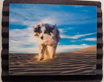 8 x 10 photo on vintage metal- Torrey at the sand dunes