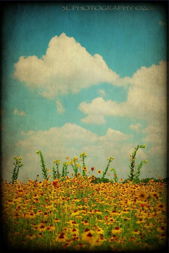 Fine Art Photography Prints-Texas Landscape-Southwestern Home Decor-Rustic Art Prints-Wildflowers