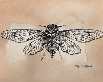 Cicada Card Hand Drawn Blank Card Entomology, Insects