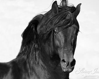 El Caballo Negro II - Fine Art Horse Photograph - Horse - Black and White