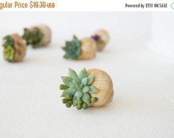 Christmas SALE Green Blue Succulent Snail Shell Wholesale Home House Table Decor Decoration Accessory Wedding Favors Housewarming Christmas