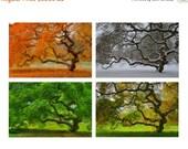SALE 20% OFF Four Seasons Wall Art, Japanese Maple Tree, 6X9 Print Set, Landscape Photography, Autumn, Winter, Spring, Summer, Nature, Tree