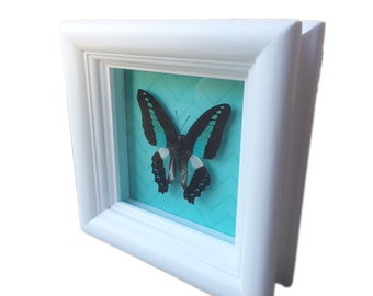 Real butterfly shadowbox - Butterfly Framed Art, Housewarming Gift, Wedding Gift, Butterfly Decor, Framed Butterfly, Real Butterfly