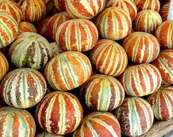 5 Kajari Melon Seeds-1350